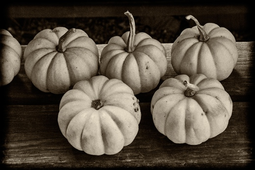 white-gourds