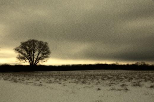 treeline-glow