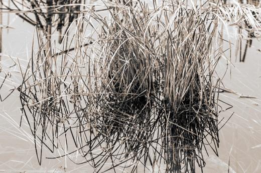 marsh-grass
