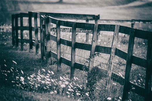 queen-annes-fence