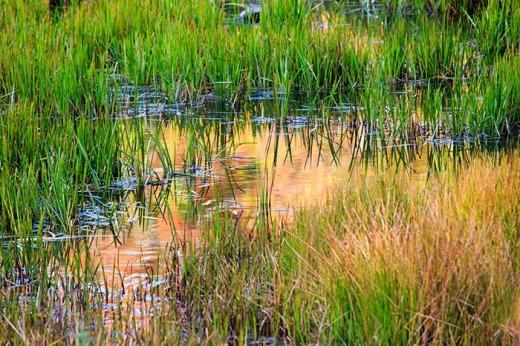 autumn-marsh